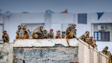 A Large Group Of Monkeys Crowded On The Roof Of A Building In India