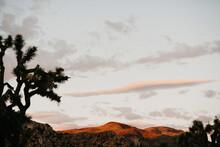 Sunrise In The Mohave Desert