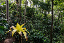 Organic Coffee Farm In Costa Rica With Flower