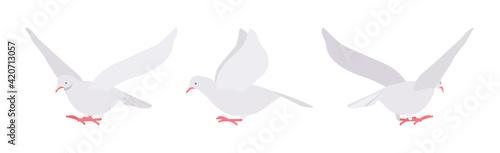 Fotografia White pigeons, doves set, domestic or street bird in flight