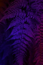 Fern Leaf In Neon Colors