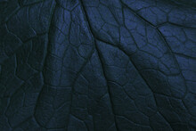 Dark Leaf Texture Closeup Background