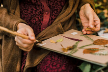 Closeup Of A Young Woman Setting Up An Herbarium In The Wood