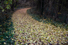 Path From Autumn Leaves