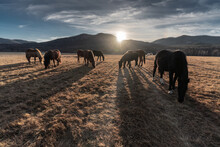Horses Of Siberia