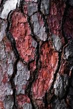 Bark Of A Pine Tree.