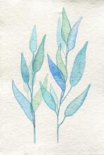 Minimalistic Herbs