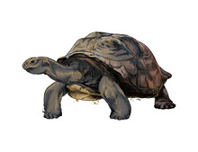 Galapagos Turtle From A Splash Of Watercolor, Colored Drawing, Realistic. Vector Illustration Of Paints