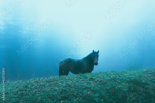 Photo horse in the cold mist