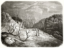 Dead Trees On A Barren Ground Outdoor In A Dark Sad Ambient. Dead Forest, Sikkim. Ancient Grey Tone Etching Style Art By De Bar, Le Tour Du Monde, 1862