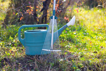 Metal Rakes And Plastic Watering Can On The Grass Under A Tree On A Sunny Autumn Day. Harvest Time.