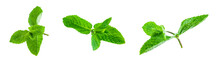 Fresh Bright Green Aromatic Mint Leaf  Isolation