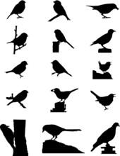 UK Garden Bird Silhouette Illustrations