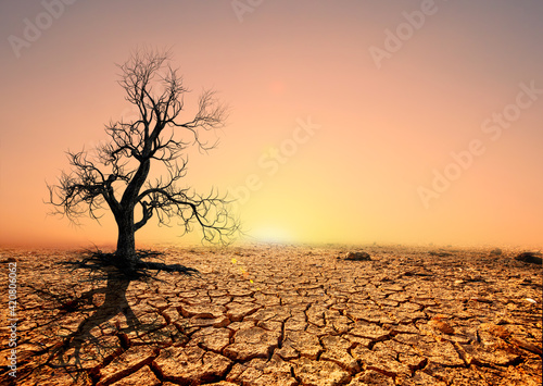 Tree silhouettes die in arid regions due to global warming. Fotobehang