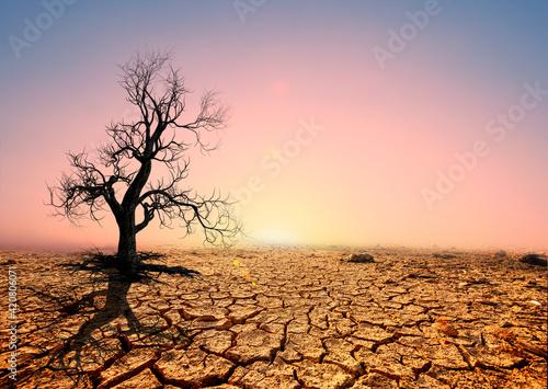 Tree silhouettes die in arid regions due to global warming. Fototapet