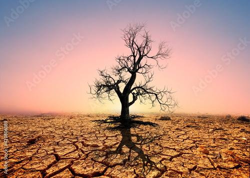 Foto Tree silhouettes die in arid regions due to global warming.