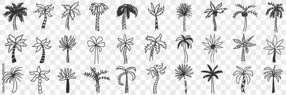 Fototapeta Exotic palm trees doodle set. Collection of hand drawn various shapes and styles of southern exotic palm trees with trunks and leaves isolated on transparent background