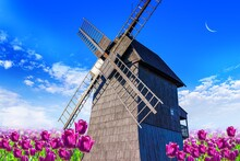 Vibrant Tulips Field With Dutch Windmill . Solar Background Of Nature