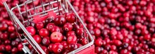 Shopping Trolley With Ripe Fresh Cranberries As Natural, Food, Berries, Buying Vitamins Banner. Selective Focus.