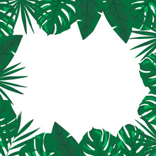 Tropical Background With Foliage And Fern.  Tropical Frame With White Center