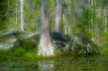 USA, South Carolina, Cypress Gardens. Stone Footbridge Next To Swamp And Cypress Trees.