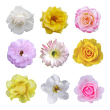 Macro Photo Of Flowers Set: Rose, Cactus Flower, Carnation, Camellia, Pear On White Isolated Background. Top View Head Flowers.