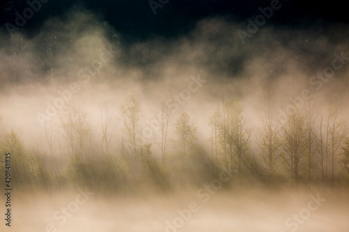 Fotografering USA, Tennessee. Early morning fog in Cades Cove.