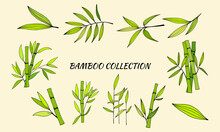 Hand Drawn Illustration With Bamboo Stem And Leaves. Set Of Bamboo Tree Leaves. Hand Drawn Botanical Collection. Drawing Of Parts Of Bamboo And Sections Of Branches And Leaves On A Green Background.