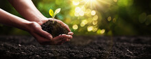 Plant In Hands. Ecology Concept. Nature Background