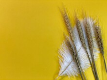On The Yellow Background There Is One Ear Of Barley And Ostrich Pyuro