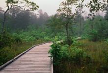 Boardwalk In Big Thicket Preserve, Texas