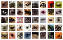 Closeup Animal Eyes Collage