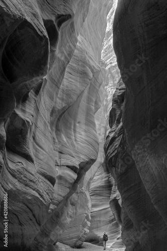 Fototapeta USA, Utah. Paria Canyon-Vermillion Cliffs Wilderness, hiker in a deep narrow slot of Buckskin Gulch.  obraz