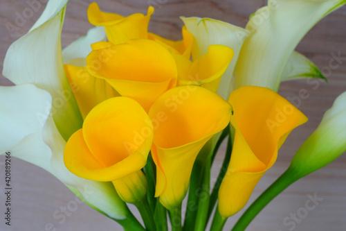 Canvas Print White and yellow calla lily flowers (Zantedeschia)