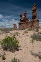 USA, Utah. Mules Ears Blooming, Goblin Valley State Park.