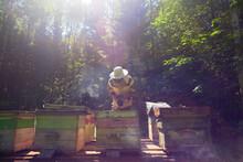 Beekeeper Working In Beehive Farm, Ural, Bashkortostan, Russia