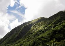 Lush Green Rainforest On Hillside, Haleakala, Maui, Hawaii