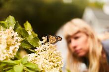 Monarch Butterfly Perched On Flower, Woman In Background