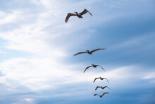 Small Group Of Seabirds Flying In In A Row Across Sky, Low Angle Side View