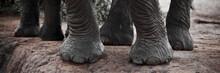 Cropped Shot Of African Elephant Feet (Loxodonta Africana), Tsavo East National Park, Kenya