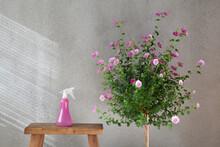 Watering Spray Bottle Beside Small Bush Of Pink Flowers In Indoor Garden
