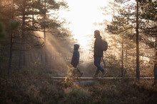 Father And Son Walking On Planks In Forest, Finland