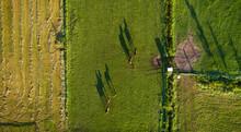 Horses Walking In Pasture On Sunny Day, Eemnes, Utrecht, Netherlands