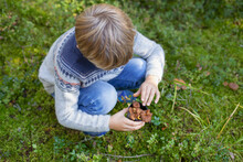 Boy Picking Up Wild Mushrooms In Forest
