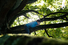 Boy Lying On Branch Of An Old Oak Tree.