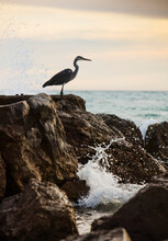 Seabird, An Egret Perched On Top Of A Rock By The Ocean Near Barcelona