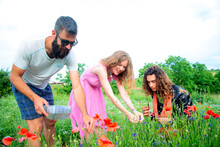 Two Men And A Woman Picking Cornflowers And Poppies In A Meadow.