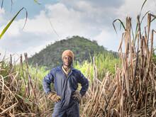 Portrait Of Sugarcane Worker On Sugarcane Plantation, Jamaica.