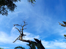 Tree And Sky,nature Images Top View