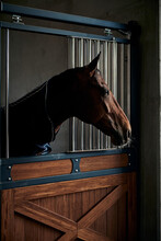 Portrait Of Young Bay Horse Staying In A Modern Stable